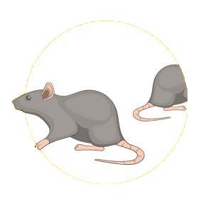 botao-pragas-roedores290x290